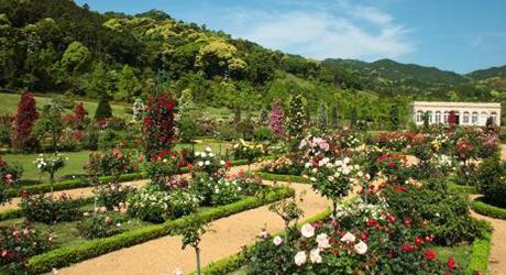 バラの香りに包まれる本格派フランス式ローズガーデンバガテル公園