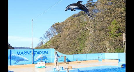 海の動物と触れ合えるショーが満載「下田海中水族館」